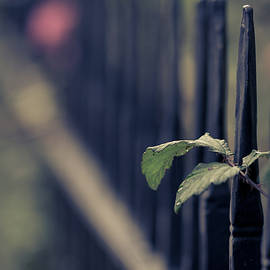 Fence by Clare Bambers