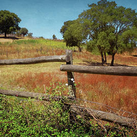 Fence in Countryside - Carlos Caetano