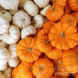 Onedayoneimage Photography - Festive Pumpkins
