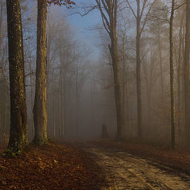 Foggy morning in the forest by Ulrich Burkhalter