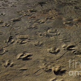 Field of Dinosaur Tracks by Meandering Photography