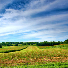 Field of Dreams Two by Steven Ainsworth