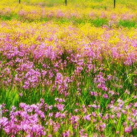 Field of flowers by Karen Cook