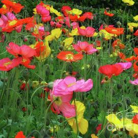 Field Of Poppies by Elle Arden Walby