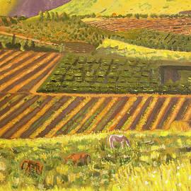Fields in Israel  by Debbie Davidsohn