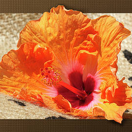 Phyllis Denton - Fiesta Colors Hibiscus