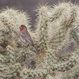 Finch on a Cactus by Ruth Jolly