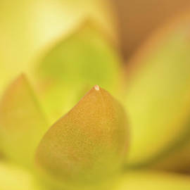 Find Focus in Nature - Ana V Ramirez