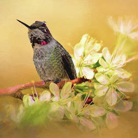 Find Joy - Hummingbird Art by Jordan Blackstone
