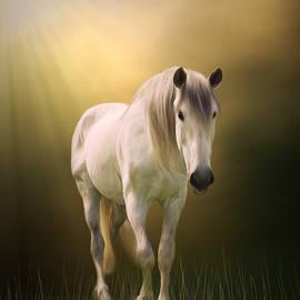 Jordan Blackstone - Find Your Way Home - Horse Art
