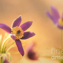 Fine Flower in Detail by Tanja Riedel