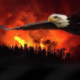 Joy McAdams - Fire Flight