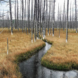 Yellowstone Meandering Stream by Norma Brandsberg