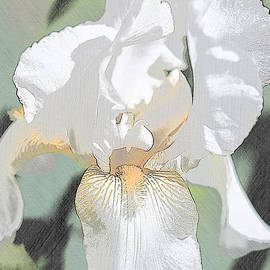 First Iris of the Summer by Sherry Hallemeier