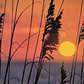 First light by Eduard Moldoveanu