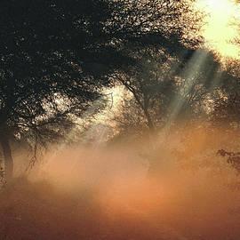 Manjot Singh Sachdeva - First Rays