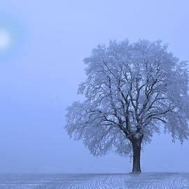 David Dehner - First Snow