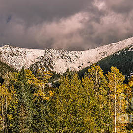 First Snow by Robert Bales