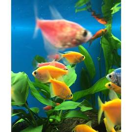 Fish Tank With Colorful Fish