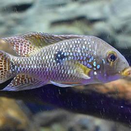 Fish by Utpal Datta