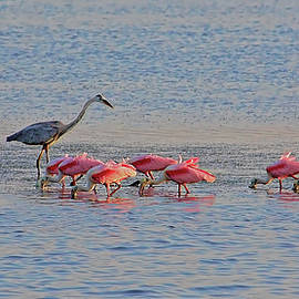 HH Photography of Florida - Fishing The Flats