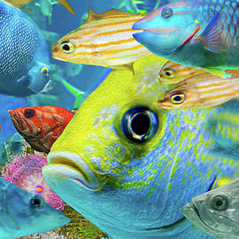 Fishy Collage 02 by Gene Norris