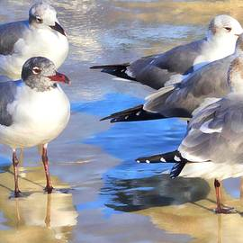 Five Gulls by Alice Gipson