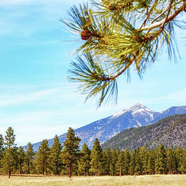 Flagstaff Arizona Mountains and Pine Trees - Susan Schmitz
