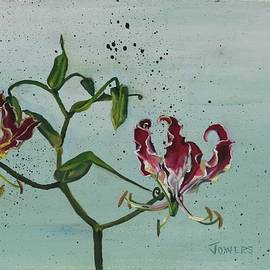 Cheryl Jowers - Flame Lily