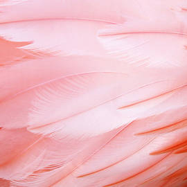 Flamingo Feathers by Cynthia Guinn
