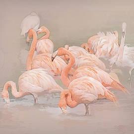 Brian Tarr - Flamingo Fun