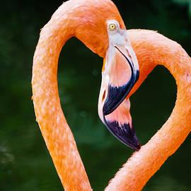 Robin Zygelman - Flamingo Heart