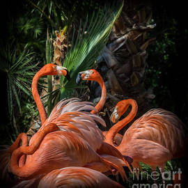 Flamingo Moves by Liesl Walsh