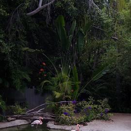 Flamingos 4 San Diego Zoo by Phyllis Spoor