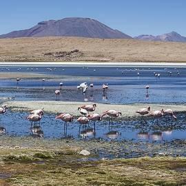 Flamingos on a Lagoon at Salar de Uyuni Bolivia by Venetia Featherstone-Witty