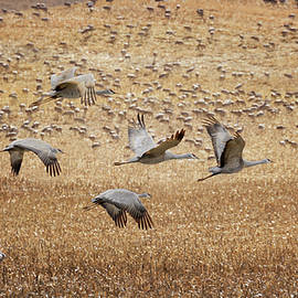 Flight Across The Sandhills by Susan Rissi Tregoning
