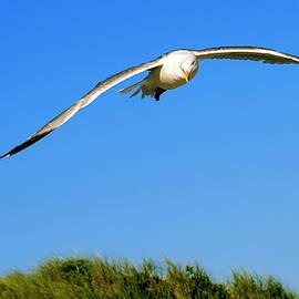 Alex Galkin - Flight of seagull