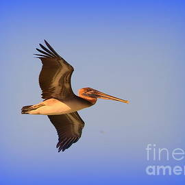 Diann Fisher - Flight of the Pelican 2 of 2
