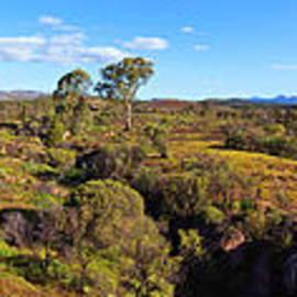 Flinders Ranges - Bill Robinson