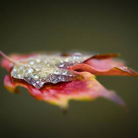 Jakub Sisak - Floating leaf