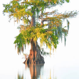 Thorsten Scheuermann - Floating Tree