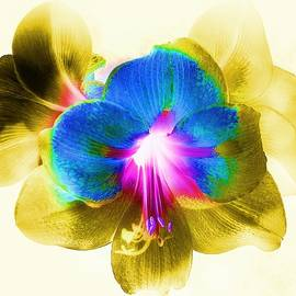 Slawek Aniol - Floral Abstract #10