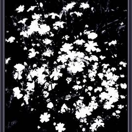 Debra Lynch - Floral Art In Black And White