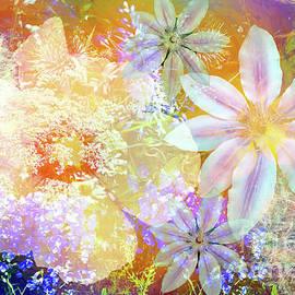 Floral Burst I by Jack Torcello