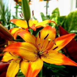Charlene Cox - Floral