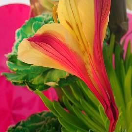 Christina Verdgeline - Floral Fusion