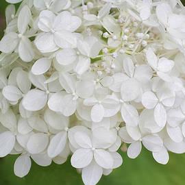 Kathi Mirto - Floral In White