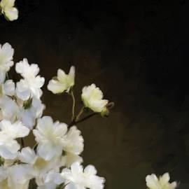 Floral12 by Peggy Novak