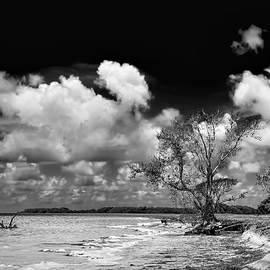 Florida Bay 6947BW