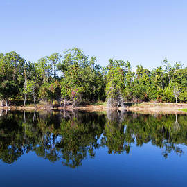 Florida Lake And Trees by Dart and Suze Humeston